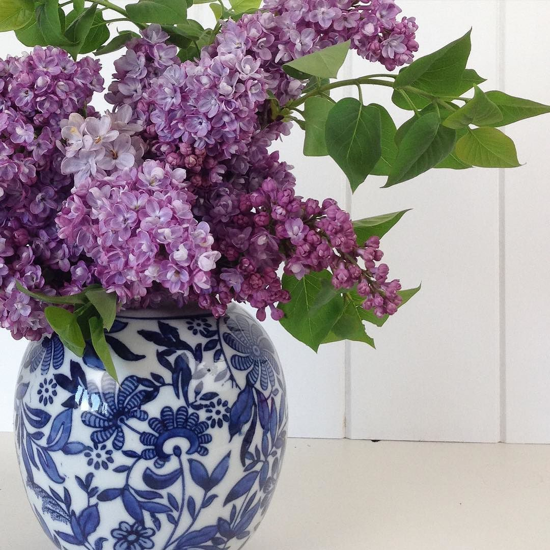 Thought we could do with something pretty and fresh today. Lilacs from the garden from last summer they were the best display l have ever had Styling and photography @diydecorator