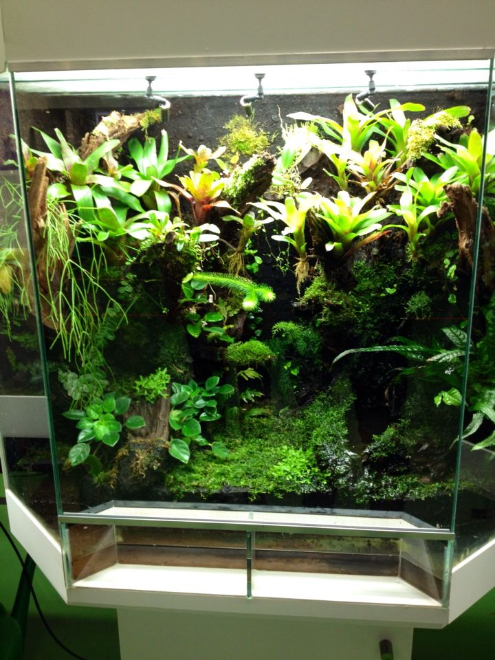 dutch rana viv at the dutch kikkerdag 2015 frogs geckos fish and terrariums vivarium. Black Bedroom Furniture Sets. Home Design Ideas