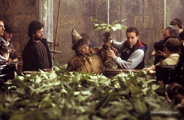 Behind The Scenes Of Harry Potter And The Chamber Of Secrets Harry Potter Film Harry Potter Mandrake Behind The Scenes