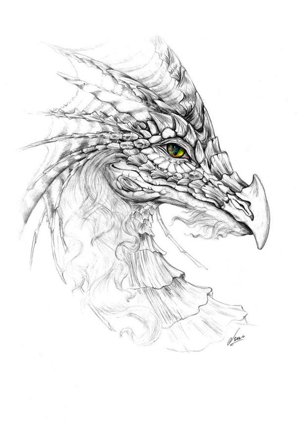 how to draw realistic dragon wings