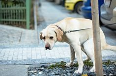 dog constipation relief