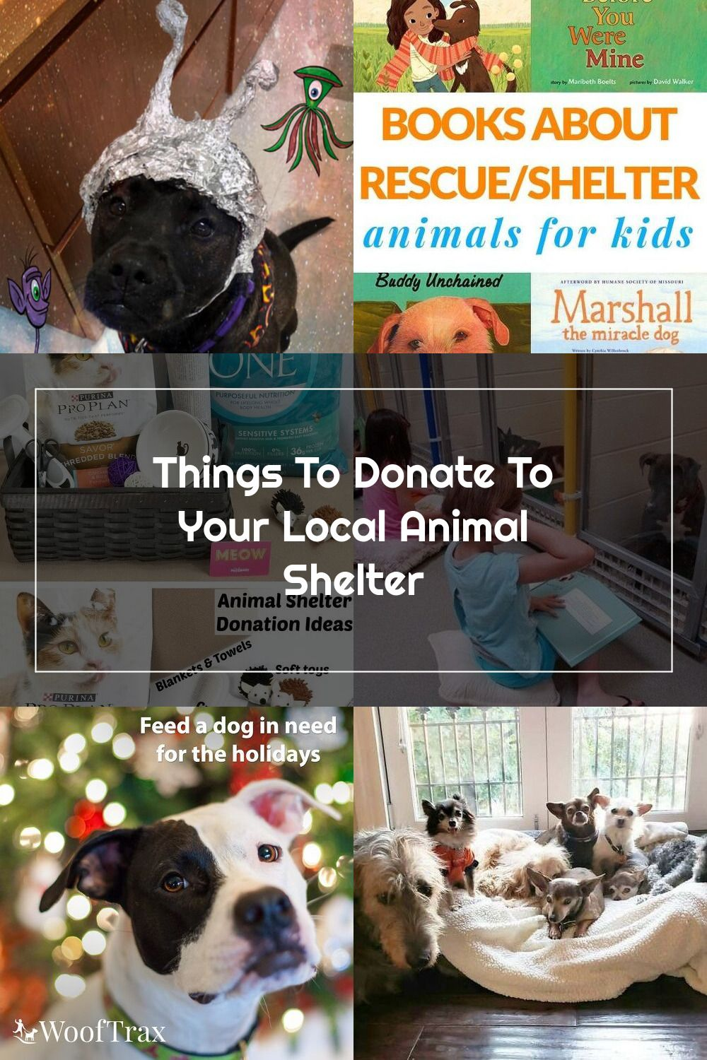 What To Donate To Your Local Animal Shelter Fortunaforall Cbias Ad In 2020 Animal Shelter Donations Animal Shelter Animals For Kids
