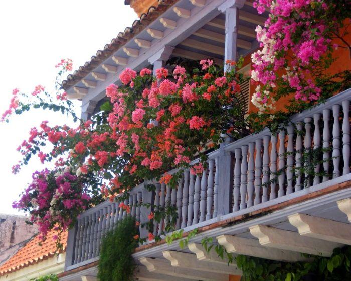 Comment avoir un balcon fleuri id es en 50 photos - Plantes pour balcons ...