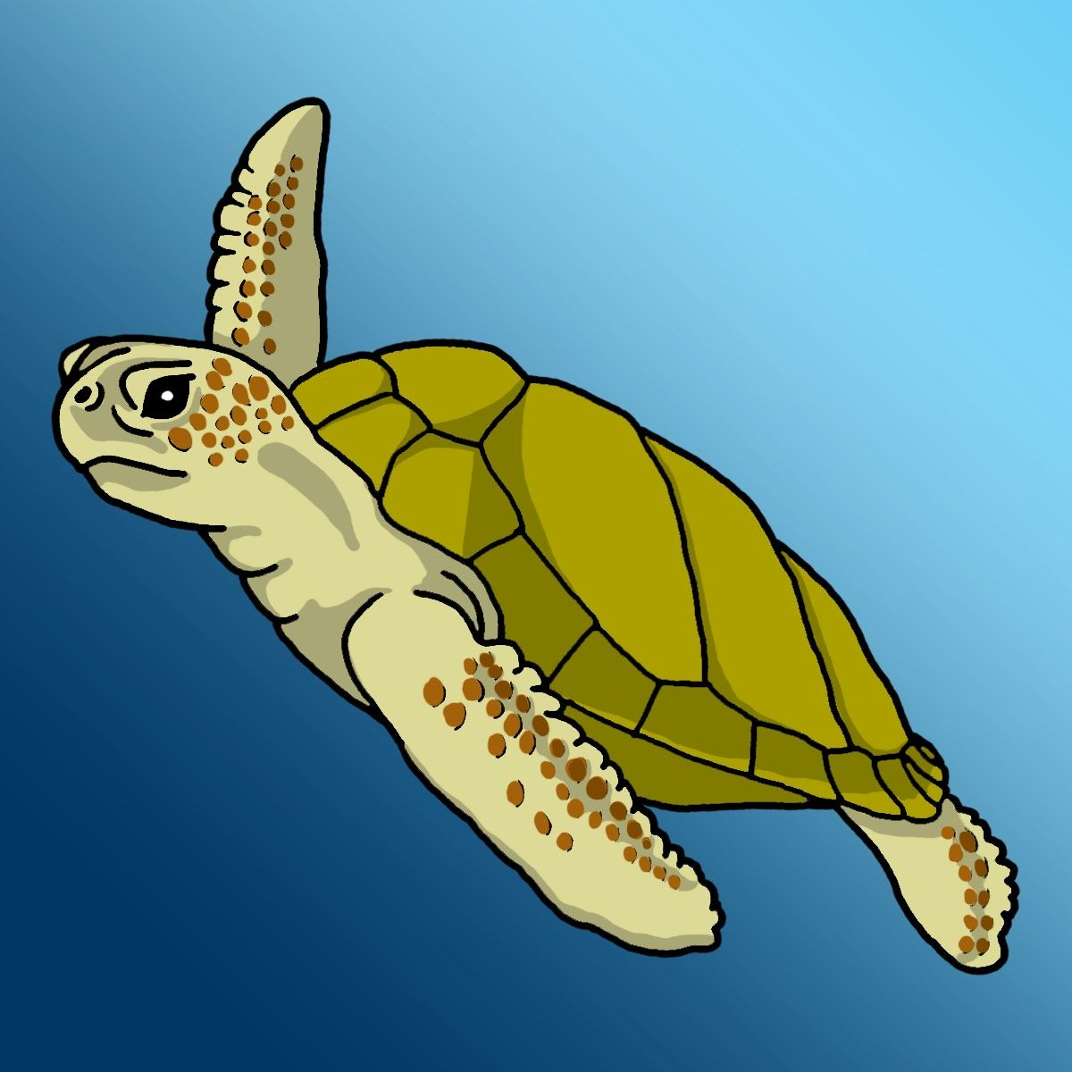 the loggerhead sea turtle weighs approximately 135 kg 300