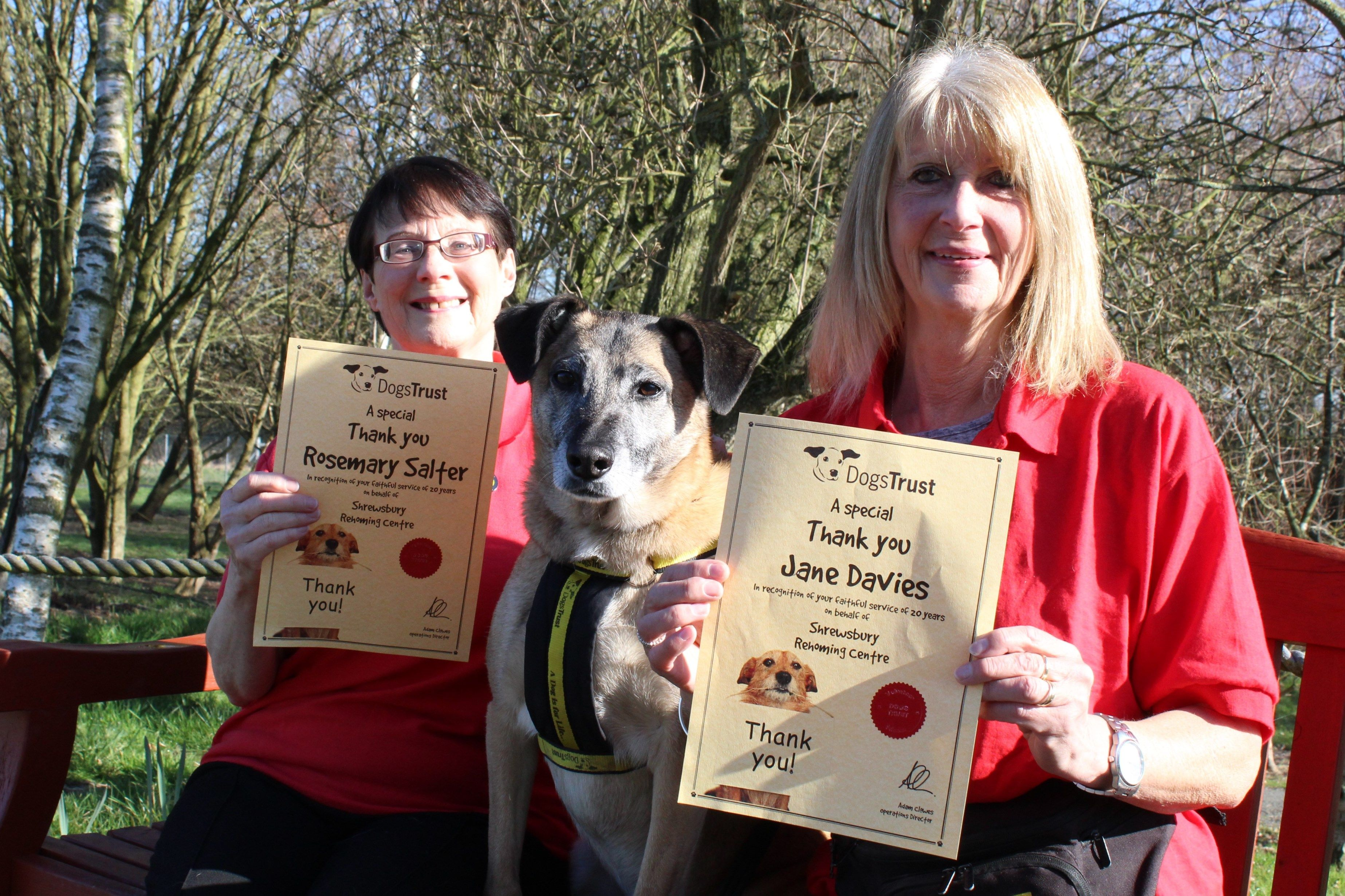 Volunteers Celebrate Two Decades Of Helping Rescue Dogs Dog Walker Dog Waiting Dogs Trust