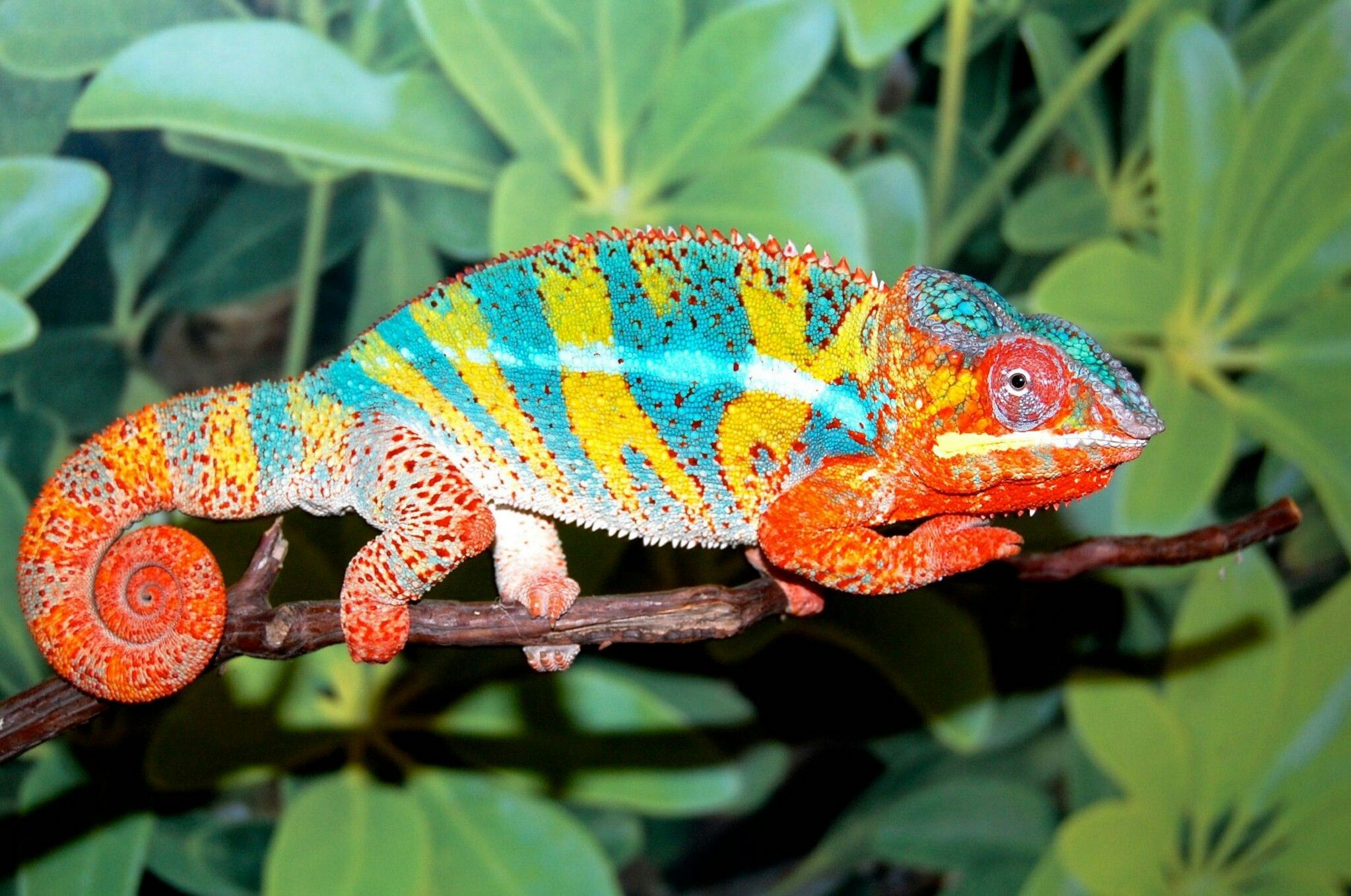 Pin by Betty on Meaning/Morphology Chameleons for