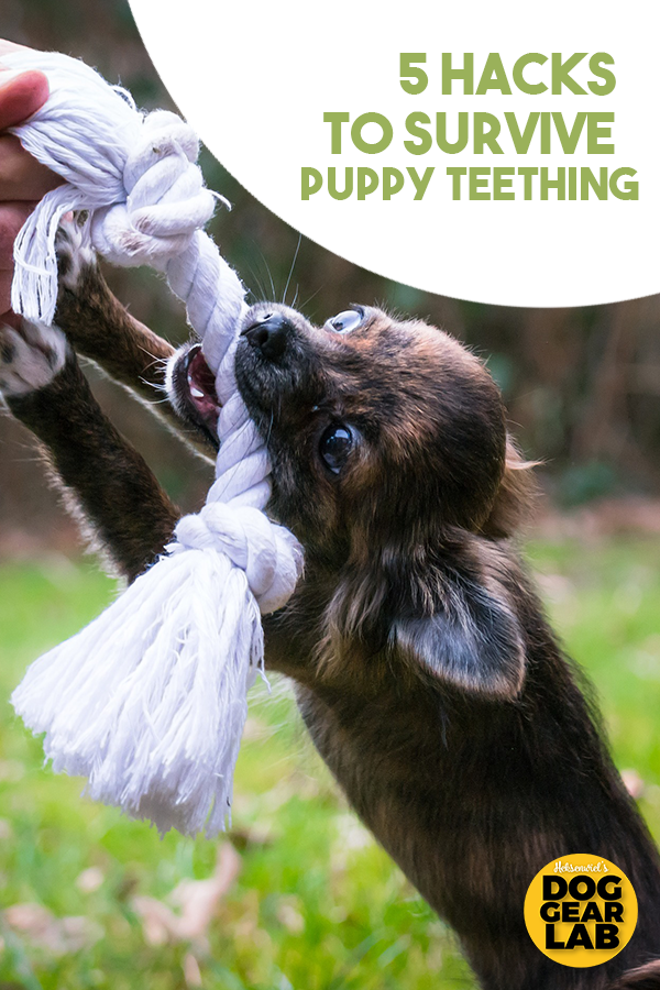 5 Hacks To Survive Puppy Teething Puppy Teething Puppies Dogs Puppies