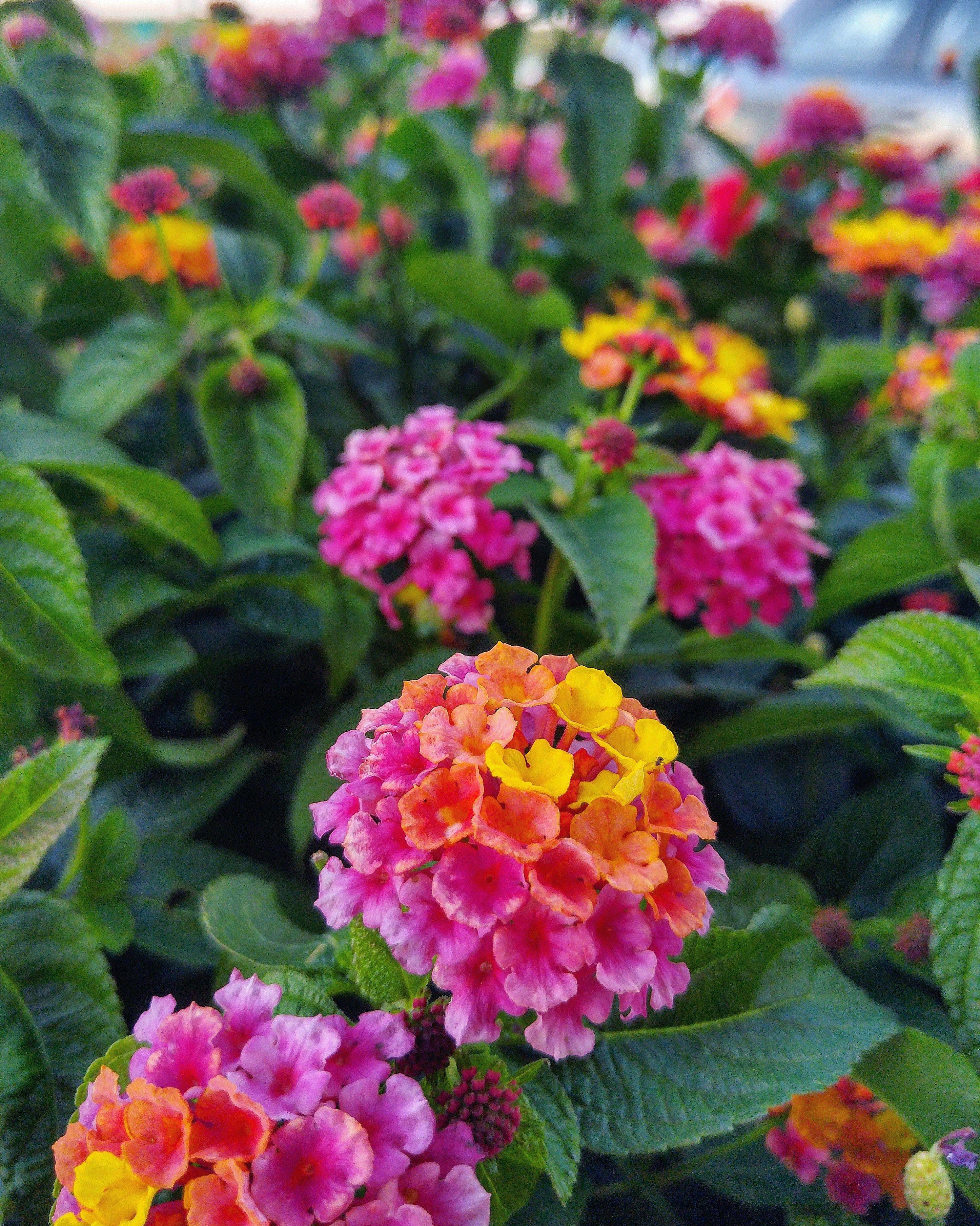 6 Month Baby Food Tips In Hindi Tillingagardentips Bohemian Garden Texas Landscaping Small Backyard Gardens