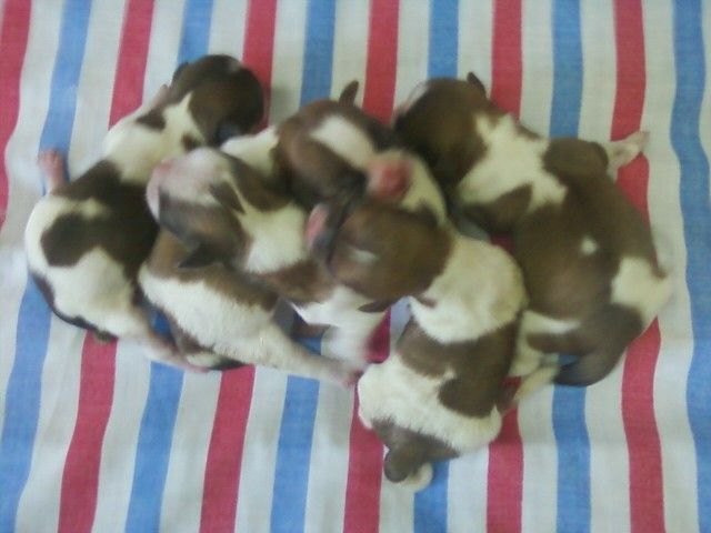 5 Shih Tzu Puppies 1 Day Old Cute Animal Pictures Shih Tzu