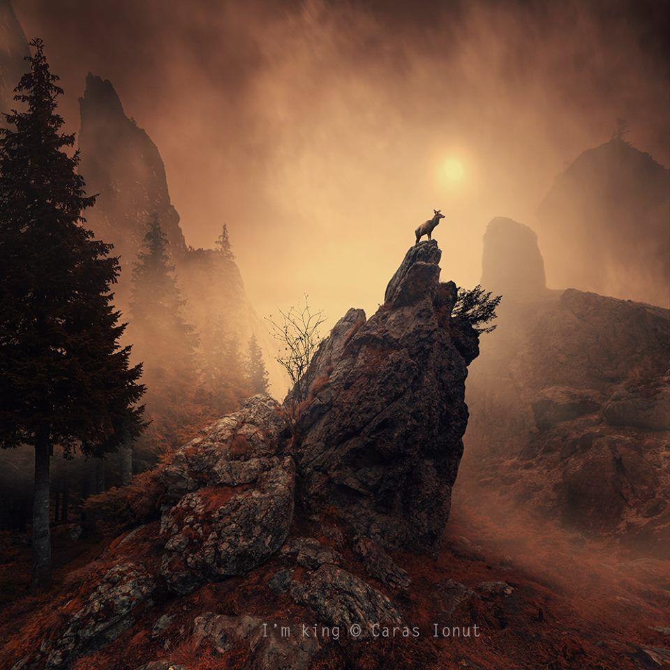 Découvrez les incroyables photos retouchées de +Caras Ionut.   Discover the amazing +Caras Ionut's digital photos.  #art   #photo