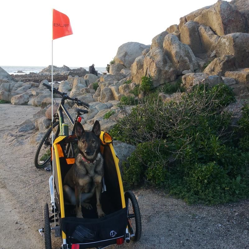 Bike Attachment for Dogs & Pets Tail Wagon by Burley