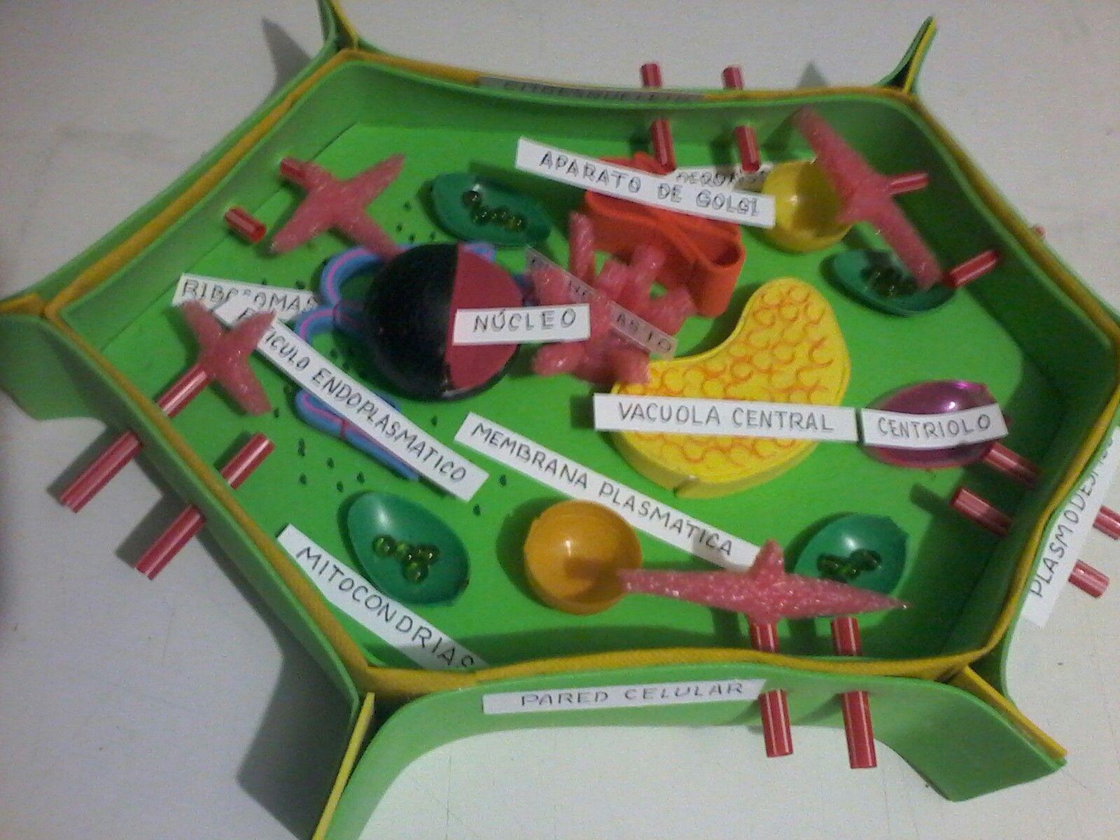 Maqueta La Célula Maquetas De Celulas Célula Vegetal Y