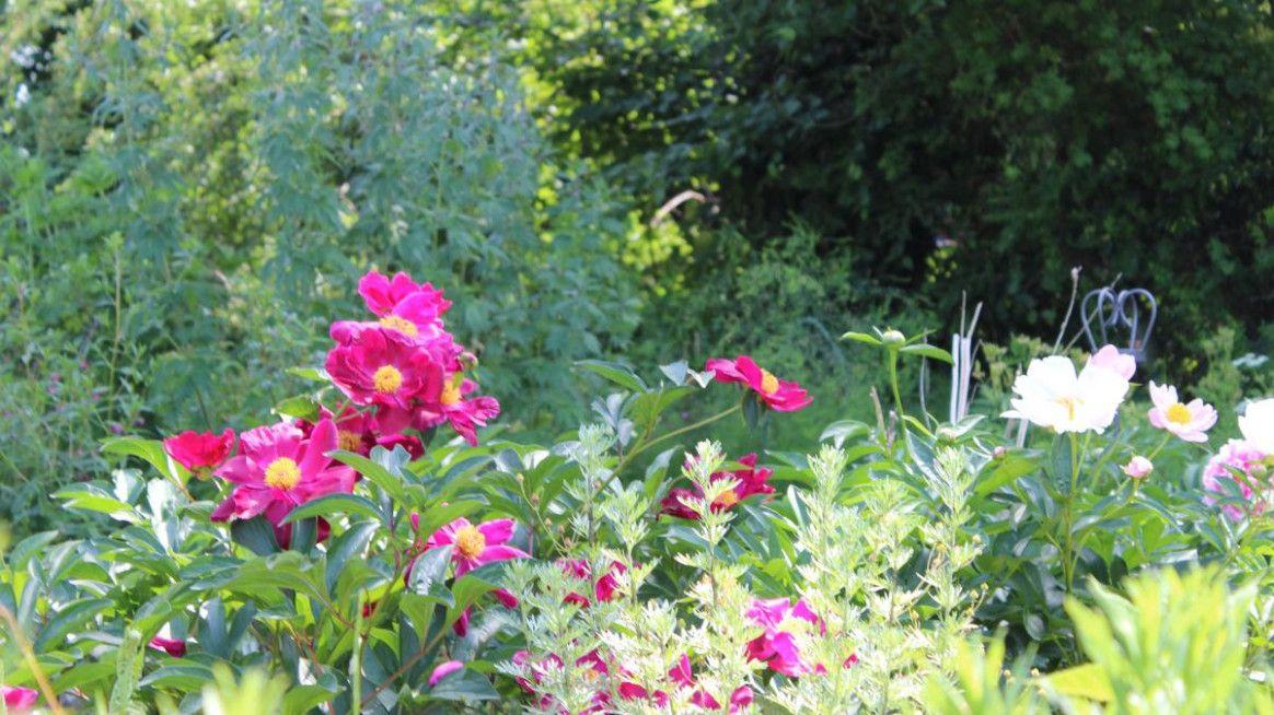 Offenbar Garten Schleswig Holstein Blumenrabatte Garten Pflanzen