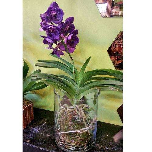Exotic Vanda Orchid In Glass Vase Vanda Orchids Orchid And Exotic