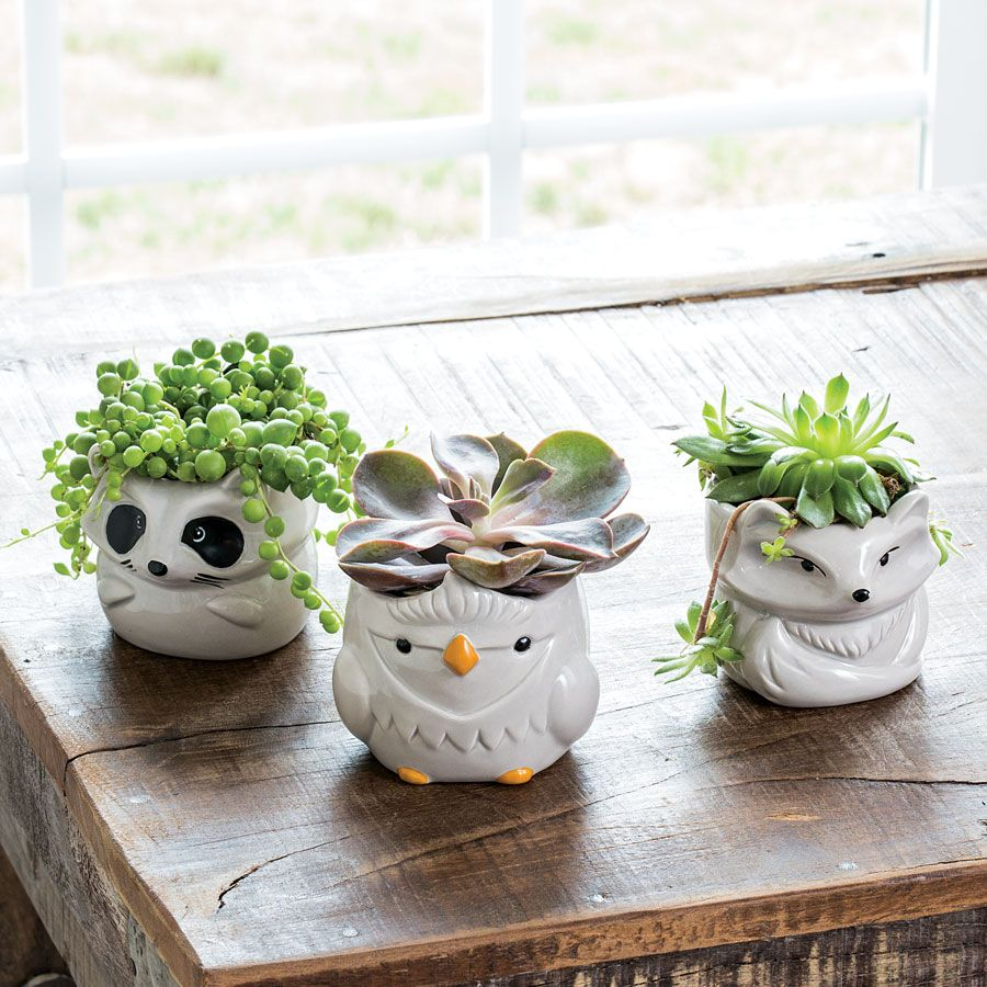 Succulents In Little Cute Woodland Animal Pots These Tiny Whimsical Creatures Are Sure To Bring A Smile To Anyone S Succulents Painted Flower Pots Flower Pots