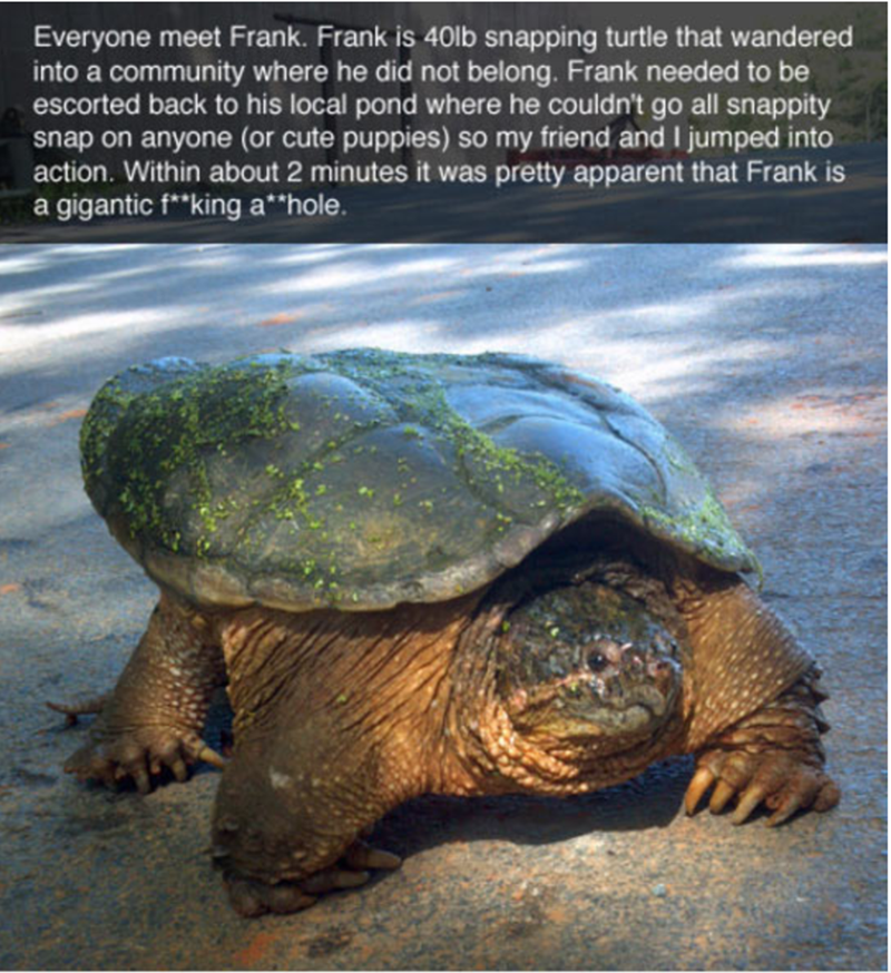 The Hilarious Story Of Frank The Snapping Turtle Turtles Funny Snapping Turtle Pet Hacks