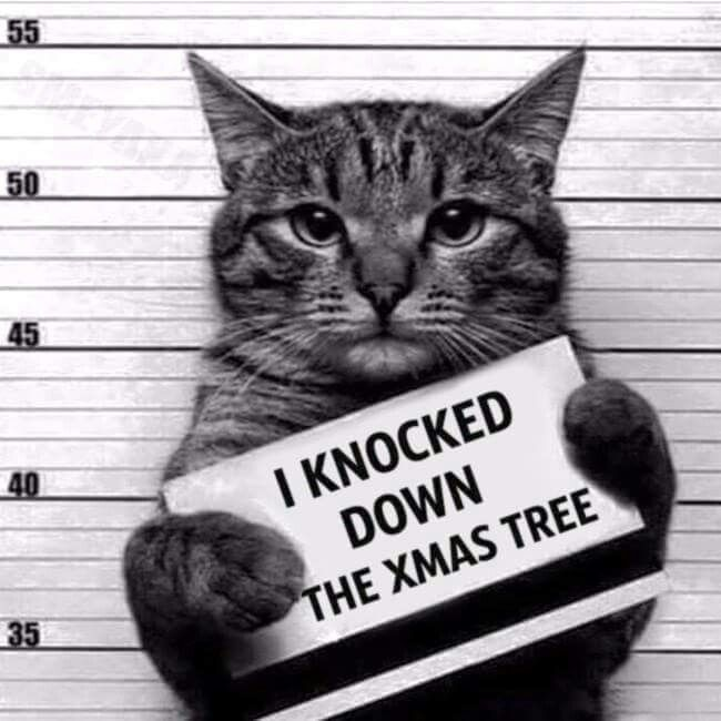 i knocked down the christmas tree animals cats jokes