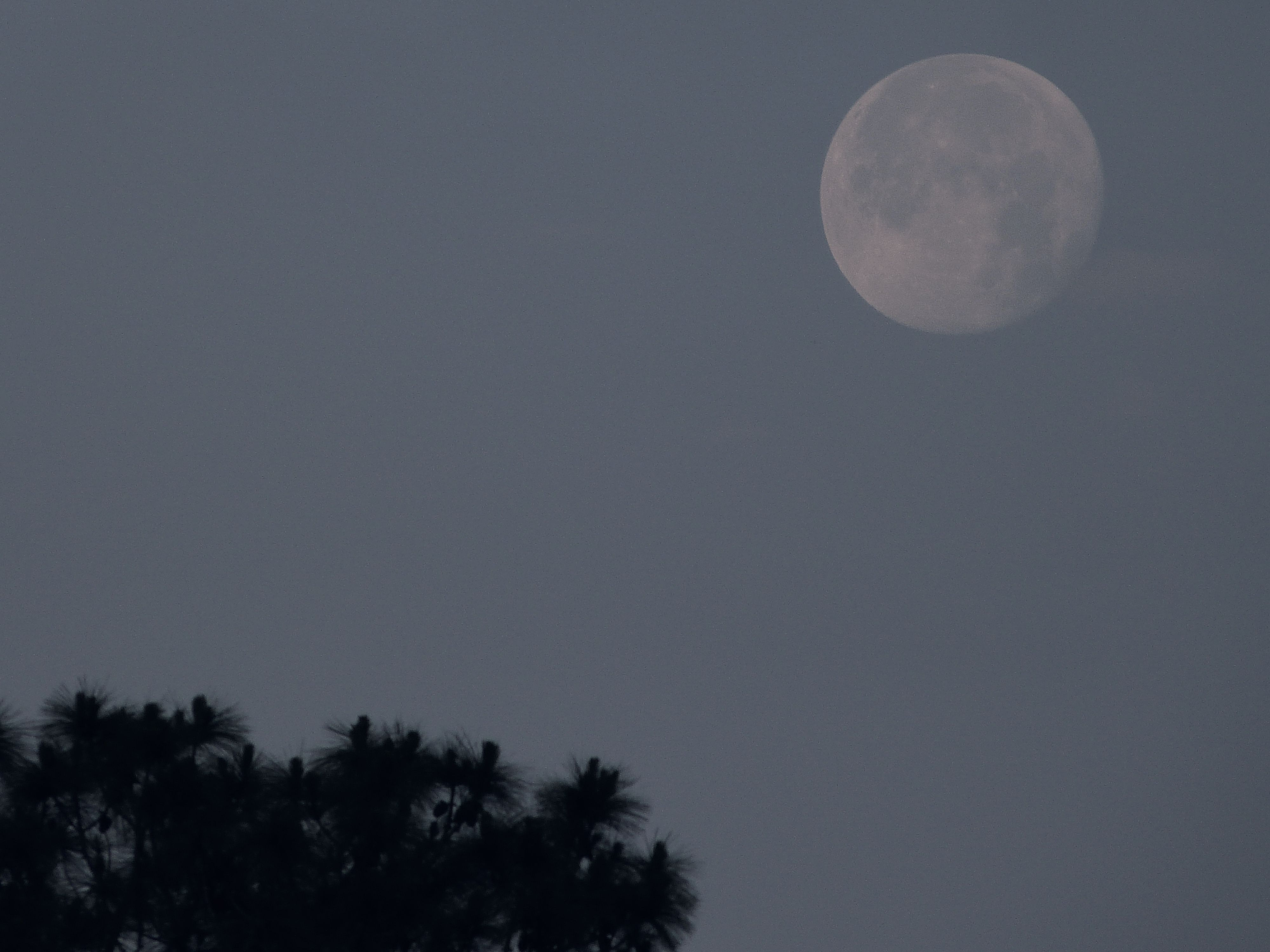 Moon shot with the lumix...........