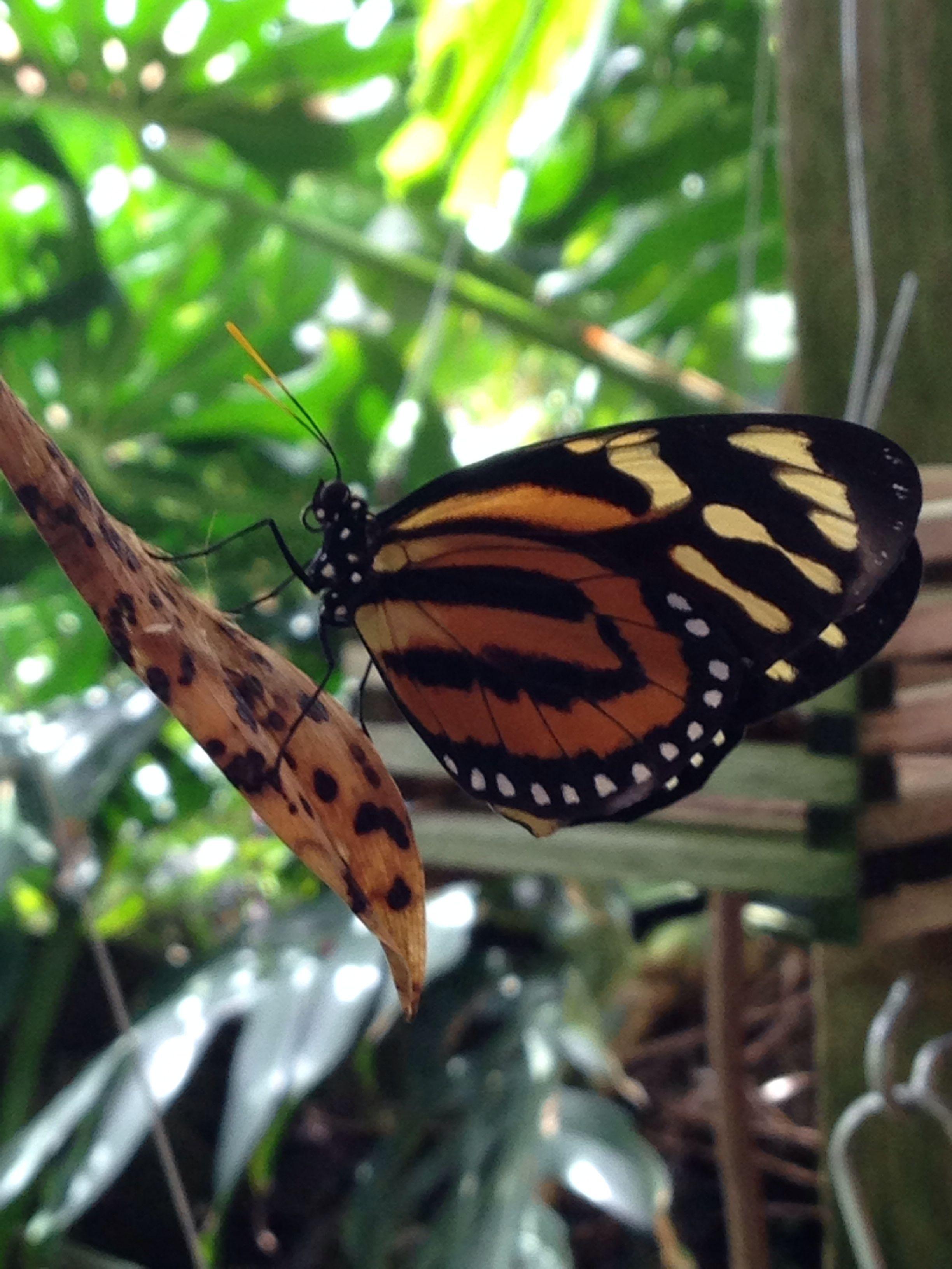 Butterfly - Edmonton, Canada