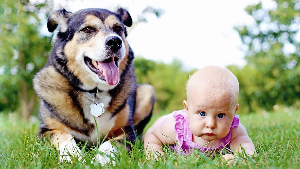 Amazing dogs teaching babies httpsyoutubembfhbonrrs