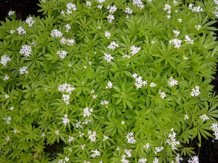 Plantas De Suelo