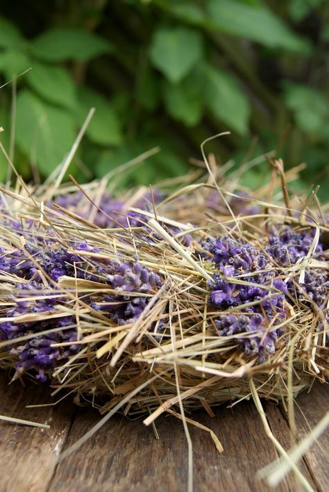 Photo of Lavendel er i juli. Og fordi lavendelen i forgården allerede er falming …