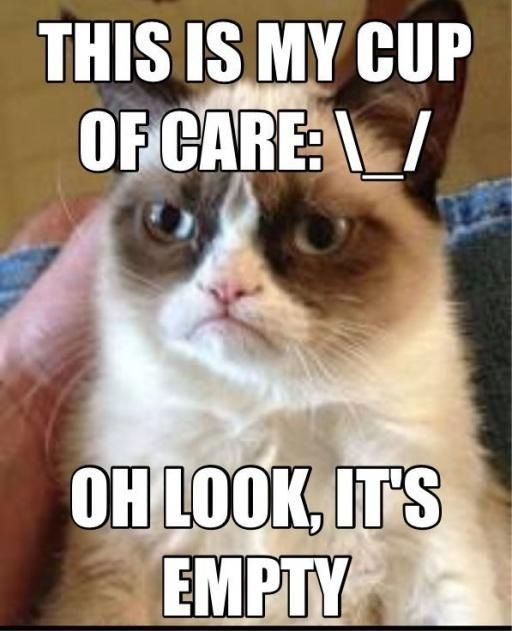 Photo of Most Funny Quotes : Hilarious #grumpy cat