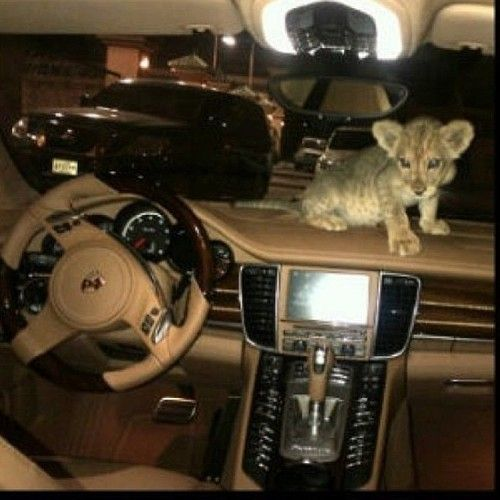 Ummm my car! and exotic pet :)