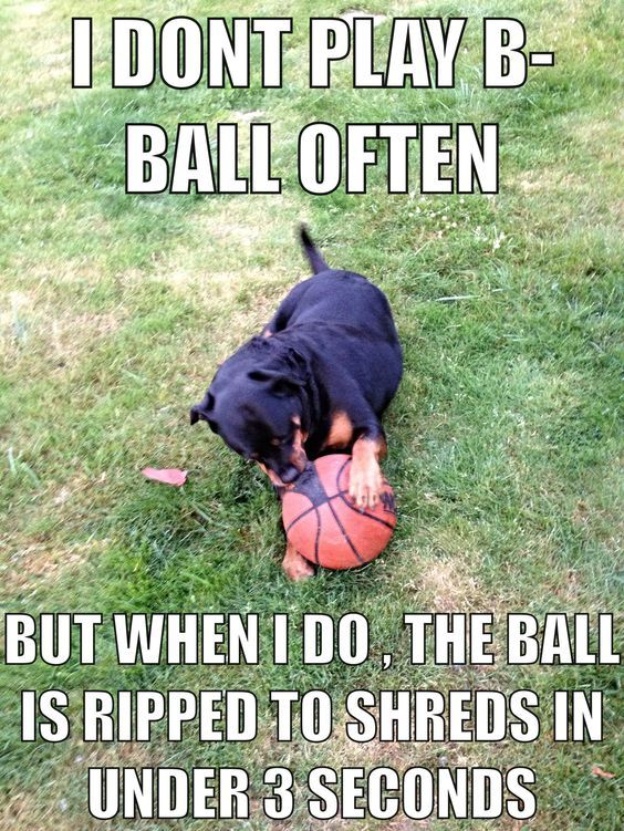 10 Best Rottweiler Memes Of All Time Rottweiler Funny Rottweiler Rottweiler Love