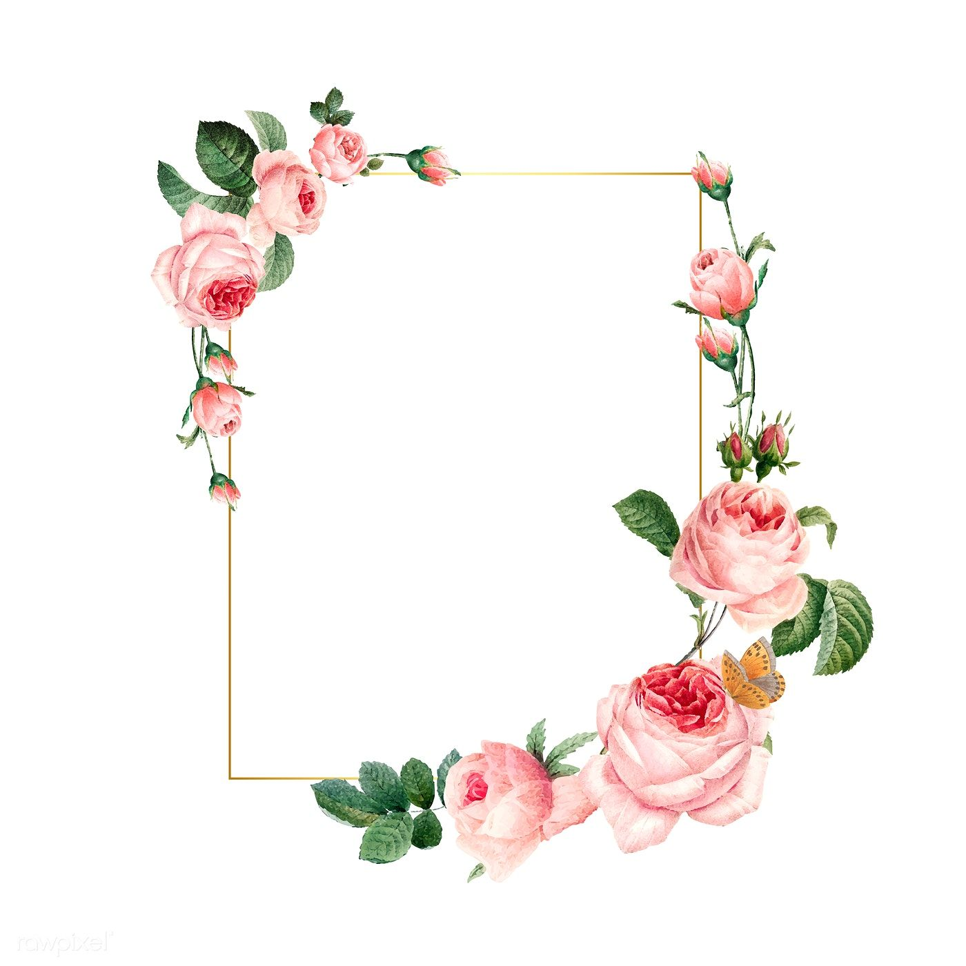 Blank Rectangle Pink Roses Frame On White Background Vector Free