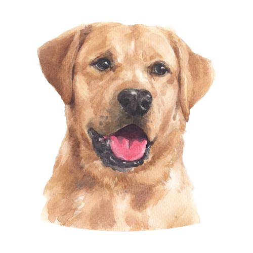 Beautiful Labrador Retriever Watercolor Painting In 2020 Labrador Retriever Labrador Yellow Labrador Retriever