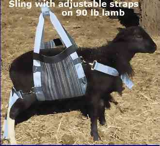 Weighing Scale Amp Lift For Sheep Goats Amp Other Small Farm