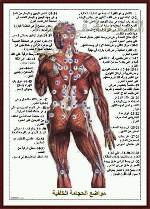 الحجامة Hijama Health And Nutrition Good Massage