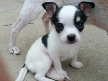 Kansas Humane Society Domino Available For Adoption In Wichita Ks 316 524 9196 Humane Society Animal Shelter Animals