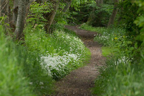 Forest Path - Bornholm, Denmark