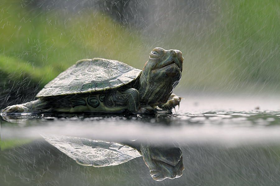 """green turtle"" by Sirajuddin Halim on 500px"