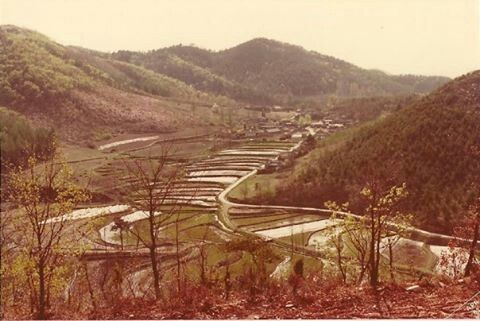 Korean rice patties / fields.