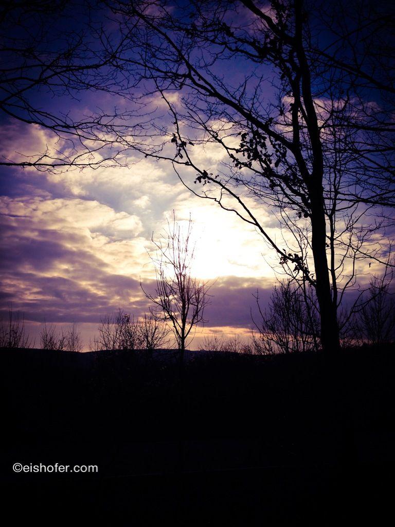 #sunrise #nature #austria #loweraustria #wood #walk #niederösterrich #wald #österreich #natur #december #dezember #2013