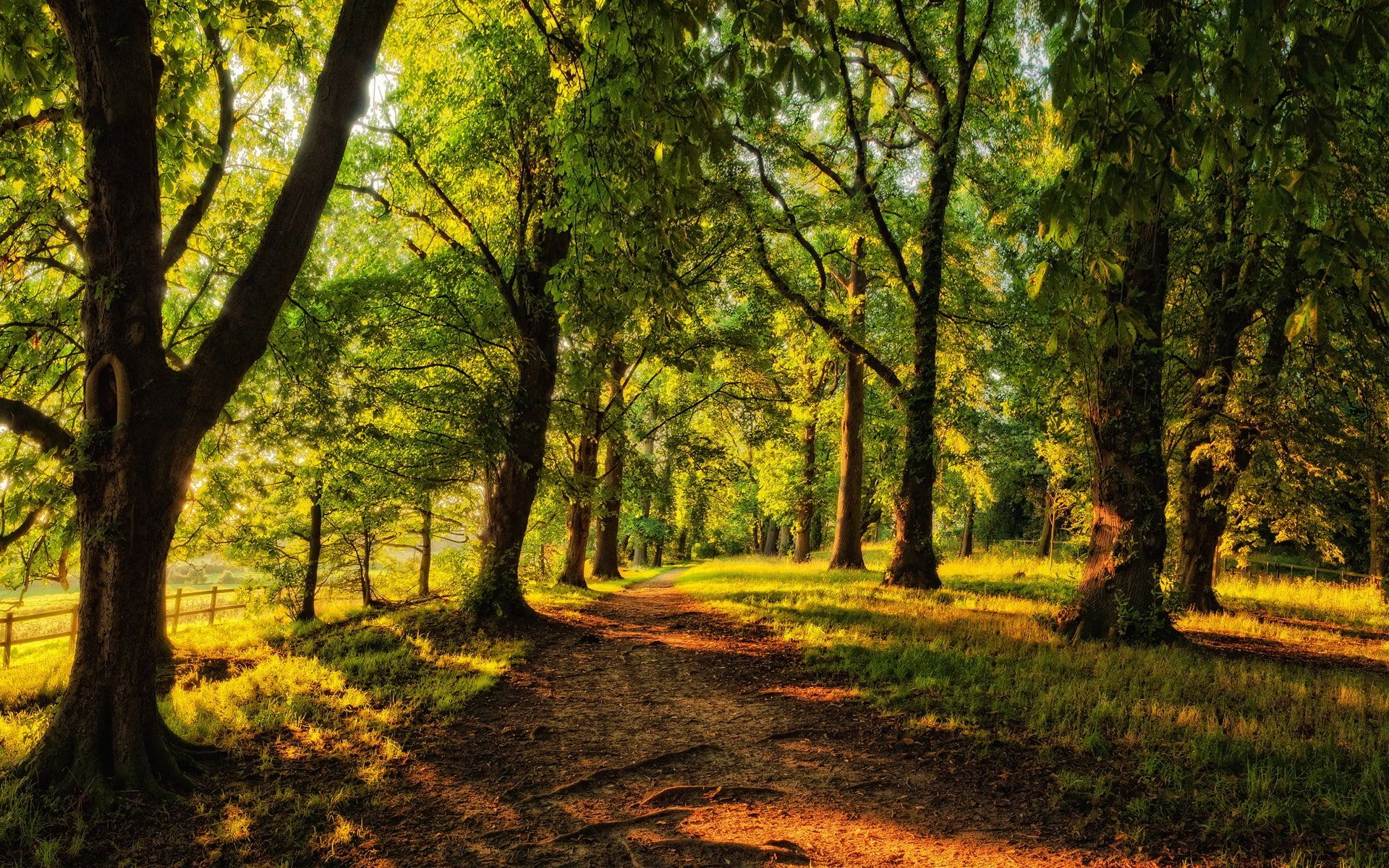 Image Background Nature Hd 1920x1200 1080p Wallpaper Hdwallpaper Desktop Paisajes Bosque