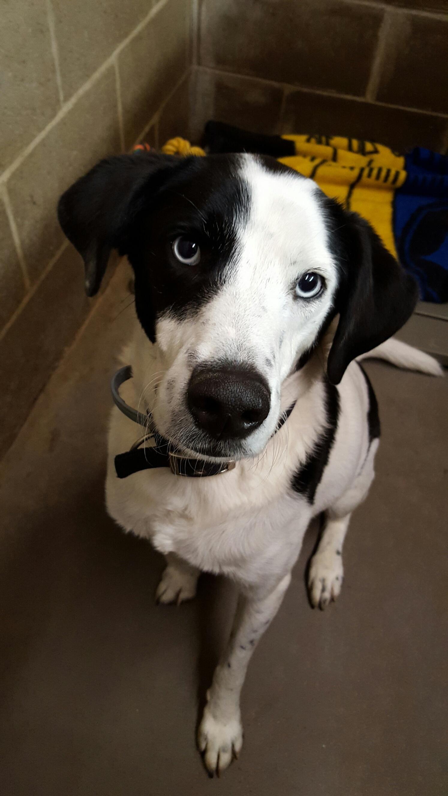 White Oak, PA Meet Mike, an adoptable Border Collie