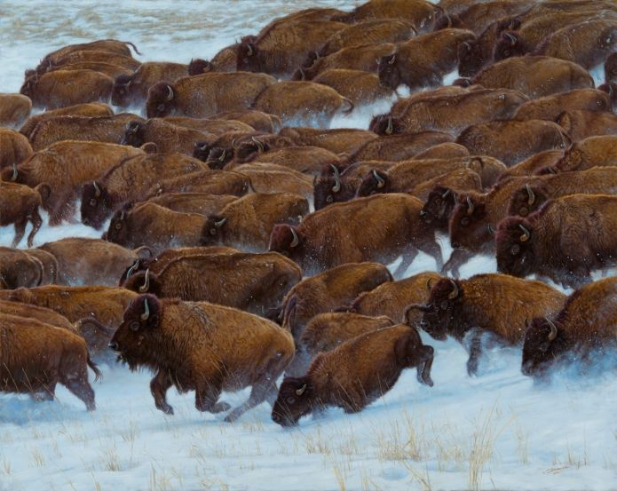 "Buffalo Run - John Banovich Limited Edition Giclée Canvas Gallery Edition: • 50 s/n plus 5 Artist Proofs • Canvas: 32"" x 40"" - $1,500 • Artist Proof: 32"" x 40"" - $1,800"