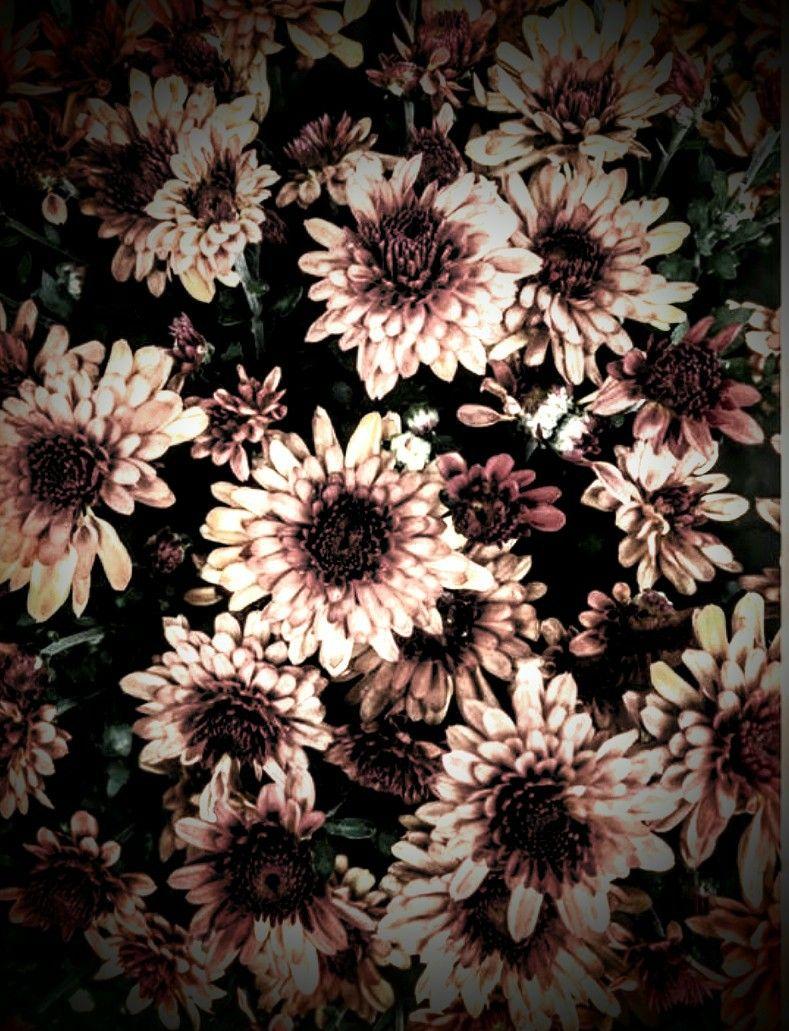 Grunge Flowers Flowers Dandelion Plants