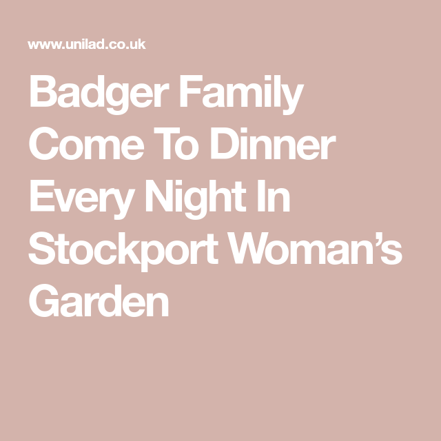 Badger Family Come To Dinner Every Night In Stockport Woman S Garden Pate On Toast Food Out Dinner