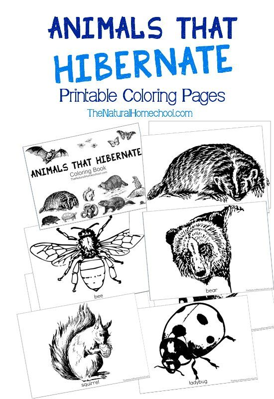 Animals That Hibernate In Winter Printable Coloring Book Animals
