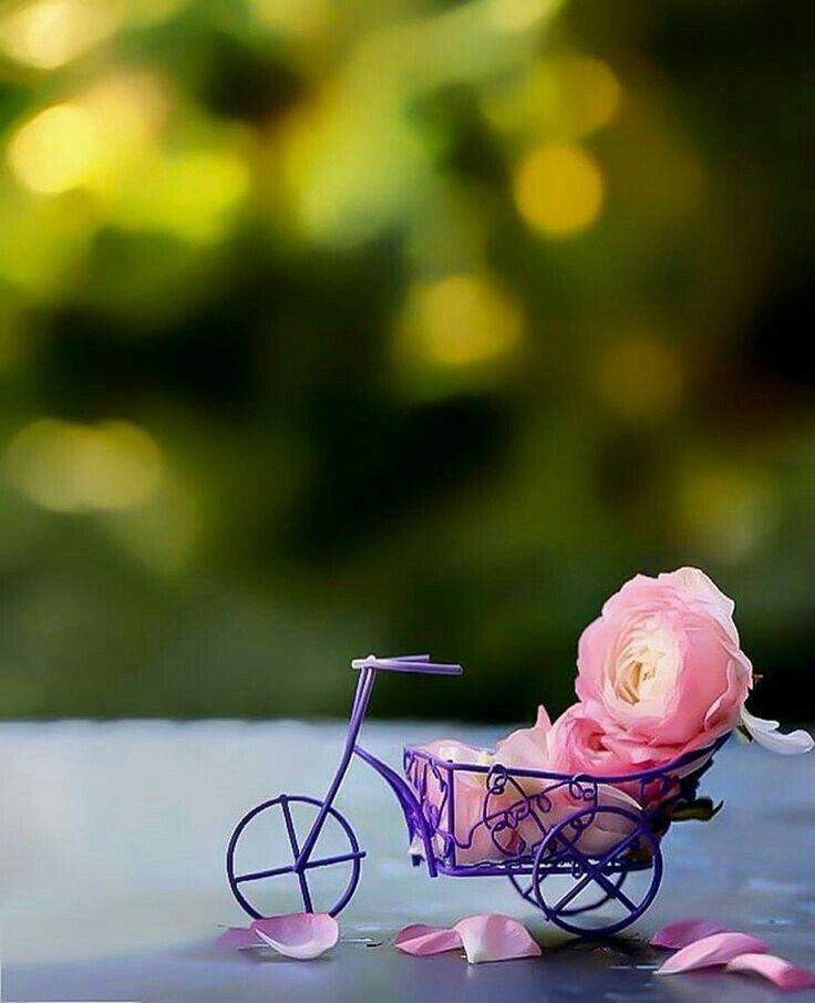 Pin By Maliha Fatima On Wallpaper Backgrounds Beautiful Wallpapers Cute Wallpapers Miniature Photography