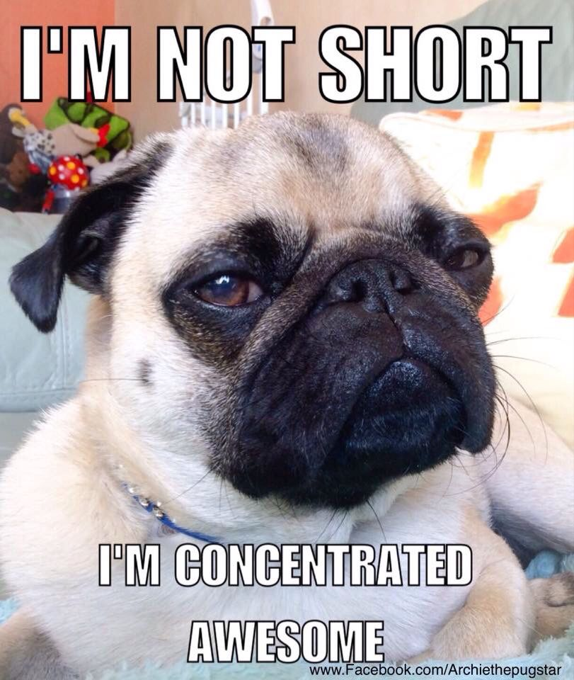 Pin By Chad St John On Pugs Pugs Cute Pugs Silly Dogs