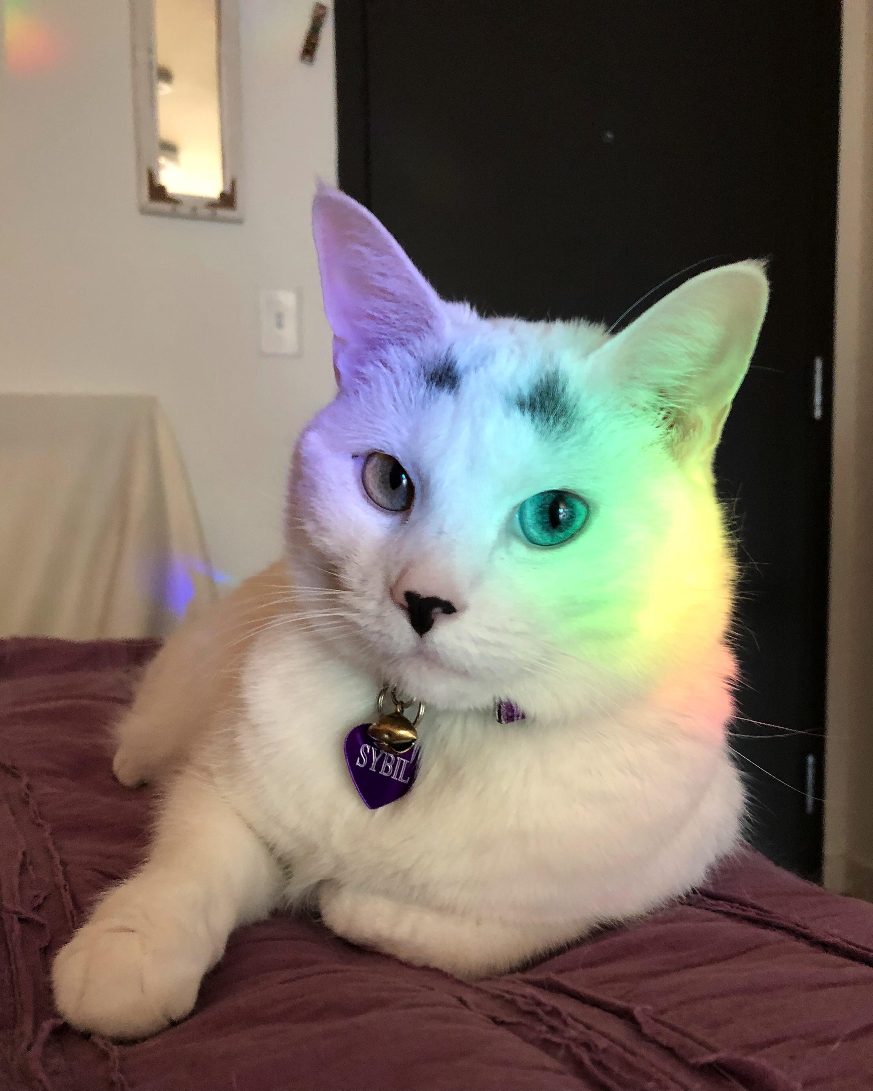 Rainbow cat strikes again!http//ift.tt/2I8GJrm Rainbow