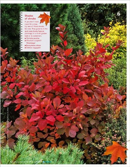 Autumn trees. Clipped from Better Homes and Gardens using Netpage.