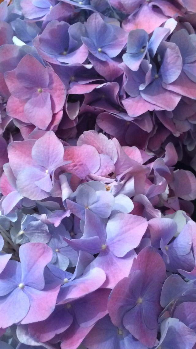 Pin By Irina Skumen On Piony I Gortenzii Beautiful Flowers Wallpapers Flowers Flower Wallpaper