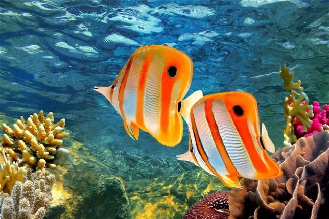 Mesterséges korall tisztítaná meg a tengervizet